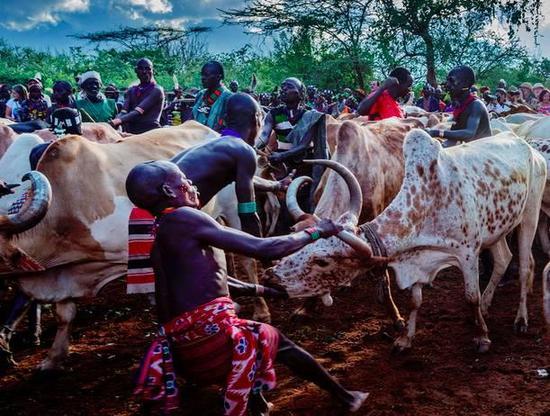 非洲传统野性 最后的原始部落文化习俗--哈莫尔族Bull jumping跳牛仪式